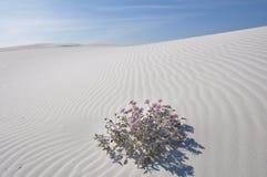 biały Mexico piaski pomnikowi krajowi nowi Zdjęcie Stock