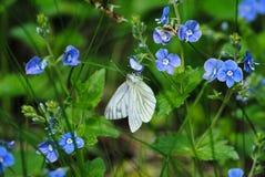 Bia?y motyl na kwiacie zdjęcie stock
