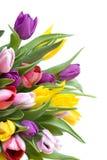 biały odosobneni bukietów tulipany Obraz Stock