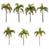 biały odosobneni drzewka palmowe Obrazy Royalty Free