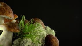 biały odosobnione las pieczarki Cepes Naturalny produkt delikatny obracanie 4K zdjęcie wideo
