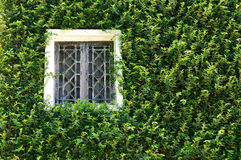Biały okno zdjęcie royalty free
