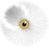 Biały oko Obrazy Stock