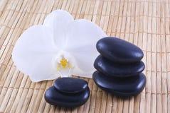 biały orchis czarny kamienie Zdjęcia Stock