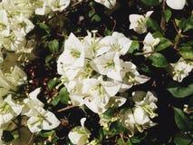 Biały papierowy kolor Fotografia Stock