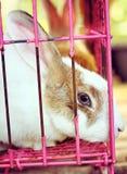 Biały pasiasty królik w klatce Zdjęcie Stock