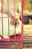 Biały pasiasty królik w klatce Obraz Stock
