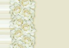 Biały peonia kwiatów przygotowania Obrazy Royalty Free
