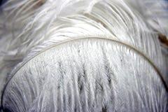 Biały piórko Fotografia Stock