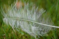 Biały piórko na zielonej trawie Fotografia Stock
