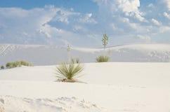 Biały piasek diun park narodowy Obraz Stock