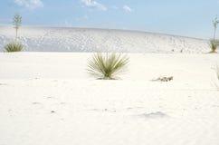 Biały piasek diun park narodowy Fotografia Royalty Free