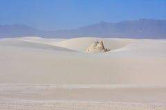 biały piaski parkowi piaski Obrazy Royalty Free