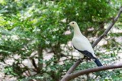 Biały Ptak Zdjęcia Stock