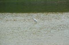Biały ptak Obrazy Royalty Free