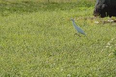 Biały ptak na lecie Fotografia Royalty Free
