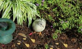 Biały ptak przy motylim konserwatorium Zdjęcie Royalty Free