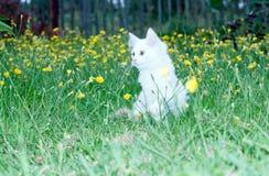 Biały puszysty kot na Zdjęcie Stock