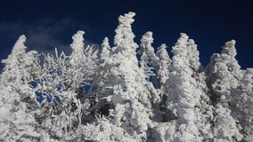 Biały raj Zdjęcie Stock