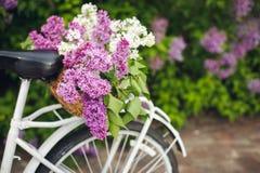 Biały retro bicykl z koszem kwiaty Obraz Stock