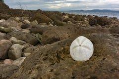 Biały seashell na skale Zdjęcia Stock