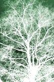 Biały sylwetkowy drzewo Zdjęcie Stock