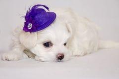 Biały szczeniak Zdjęcia Royalty Free