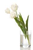 biały trzy tulipanu Fotografia Stock