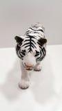 Biały tygrys Obrazy Royalty Free