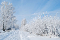 biały zima Obrazy Royalty Free