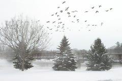 biały zimowy Obraz Royalty Free