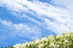 Białych kwiatów linia z niebem Fotografia Stock
