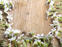 Białych kwiatów rama na brown drewnianym tle, Obraz Stock