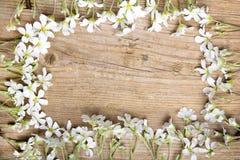 Białych kwiatów rama na brown drewnianym tle, Obrazy Stock