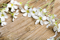 Białych kwiatów rama na brown drewnianym tle, Zdjęcie Royalty Free