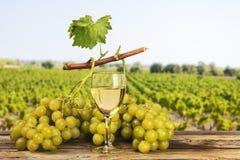 Białych winogron krajobrazowy winnica Obrazy Royalty Free