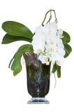 Biała orchidea Fotografia Stock