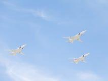 Biali łabędź na zwycięstwo dnia paradzie Zdjęcie Stock
