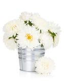 Biali asterów kwiaty Zdjęcia Royalty Free