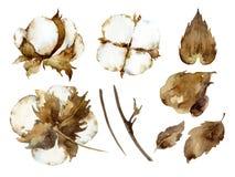 Biali bawełna kwiaty Obrazy Royalty Free