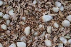 Biali brązów liście i otoczaki kompletnie Zdjęcie Stock