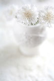 Biali cornflowers w białej wazie obrazy royalty free