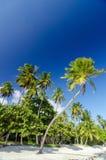Biali drzewka palmowe i piasek obraz royalty free