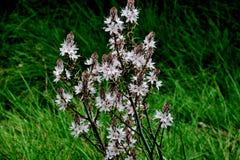 Biali dzicy kwiaty po środku lasu w zielonej trawie zdjęcie stock