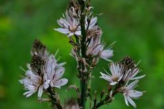 Biali dzicy kwiaty po środku lasu w zielonej trawie obraz royalty free