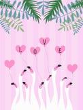 Biali flamingi na różowym tle, serce zostaw tropical Ilustracja o miłości ilustracja wektor