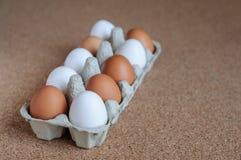 Biali i brown jajka w kartonie Obraz Stock