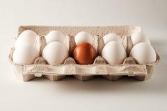 Biali i brown kurczaków jajka Zdjęcia Royalty Free