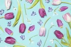 Biali i purpurowi tulipany fotografia royalty free