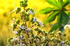 Biali i zieleni piękni kwiaty Obrazy Stock